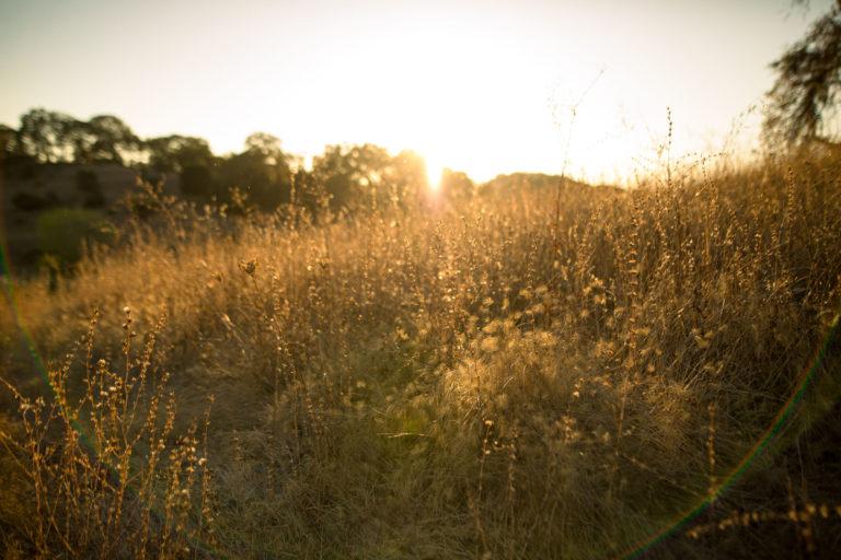 Sunset in a field at Jordan Estate